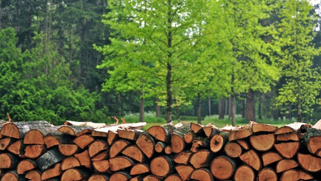 Из-за повышенного спроса дрова стремительно дорожают