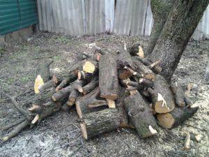 Сырые свежесрубленные дрова очень плохо горят так как имеют большое количество влаги испаряющейся в дым