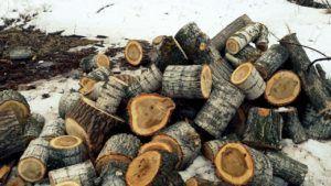 Ниже всего температура при сгорании дров из тополя